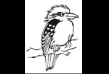 Kookaburra Kinderbetreuung